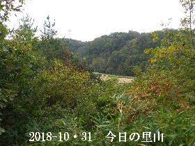 2018-10・31 今日の里山は・・・ (3).JPG
