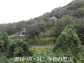 2018-10・31 今日の里山は・・・ (4).JPG