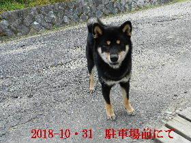 2018-10・31 今日の麻呂 (5).JPG