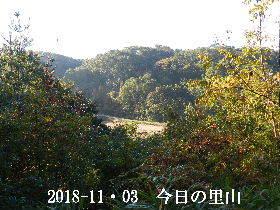 2018-11・03 今日の里山は・・・ (3).JPG