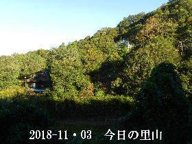 2018-11・03 今日の里山は・・・ (4).JPG