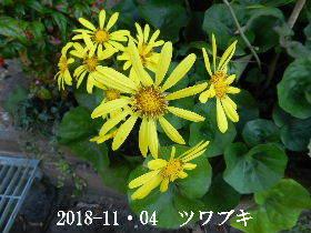 2018-11・04 今日の出遭い・・・ (3).JPG