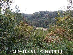 2018-11・04 今日の里山は・・・ (3).JPG