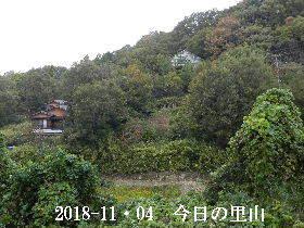 2018-11・04 今日の里山は・・・ (4).JPG