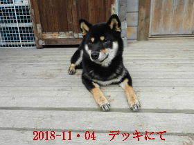 2018-11・04 今日の麻呂 (11).JPG