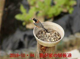 2018-11・04 我が家の居候達 (2).JPG