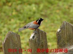 2018-11・04 我が家の居候達 (3).JPG