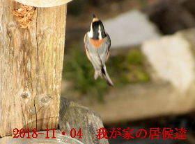 2018-11・04 我が家の居候達 (5).JPG