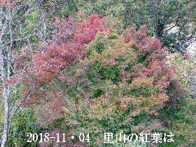 2018-11・04 里山の樹木も紅葉を (1).JPG