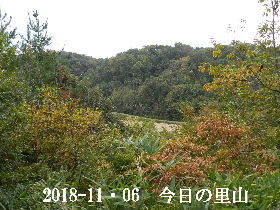 2018-11・06 今日の里山は・・・ (3).JPG