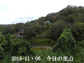 2018-11・06 今日の里山は・・・ (4).JPG