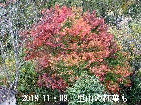2018-11・09 今日の出遭い・・・ (1).JPG