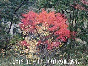 2018-11・09 今日の出遭い・・・ (2).JPG