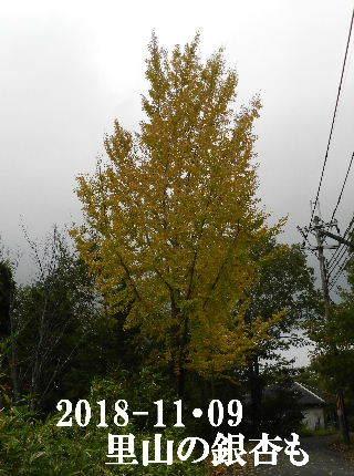 2018-11・09 今日の出遭い・・・ (3).JPG