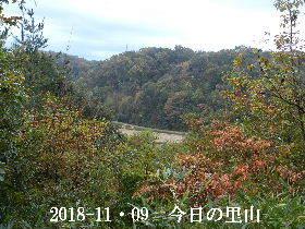 2018-11・09 今日の里山は・・・ (3).JPG