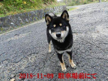 2018-11・09 今日の麻呂 (6).JPG