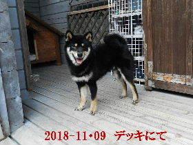 2018-11・09 今日の麻呂 (7).JPG