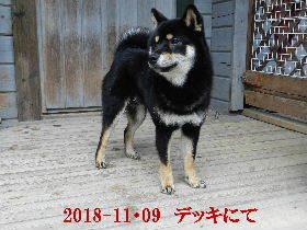 2018-11・09 今日の麻呂 (8).JPG
