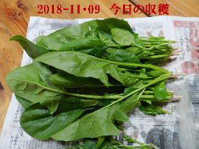 2018-11・09 我が家のスナップ・・・ (1).JPG