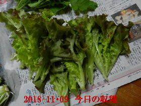 2018-11・09 我が家のスナップ・・・ (3).JPG