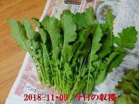 2018-11・09 我が家のスナップ・・・ (4).JPG