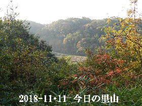 2018-11・11 今日の里山は・・・ (3).JPG