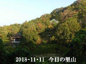 2018-11・11 今日の里山は・・・ (4).JPG