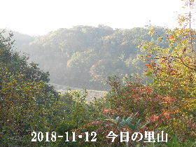 2018-11・12 今日の里山は・・・ (3).JPG