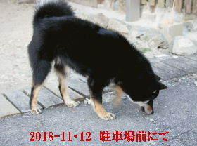 2018-11・12 今日の麻呂 (2).JPG