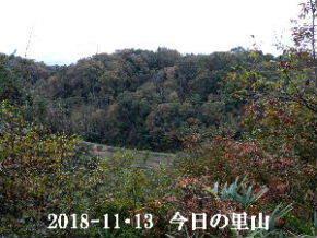 2018-11・13 今日の里山は・・・ (3).JPG