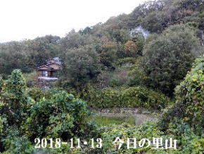 2018-11・13 今日の里山は・・・ (4).JPG