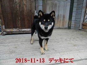 2018-11・13 今日の麻呂 (4).JPG
