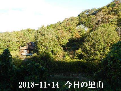 2018-11・14 今日の里山は・・・ (3).JPG