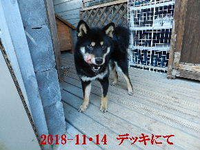2018-11・14 今日の麻呂 (6).JPG