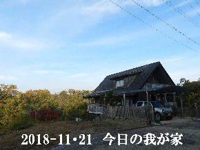 2018-11・21 今日の里山は・・・ (1).JPG