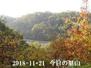 2018-11・21 今日の里山は・・・ (3).JPG