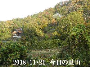 2018-11・21 今日の里山は・・・ (4).JPG