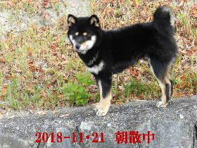 2018-11・21 今日の麻呂 (1).JPG