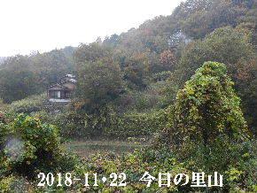 2018-11・22 今日の里山は・・・ (4).JPG