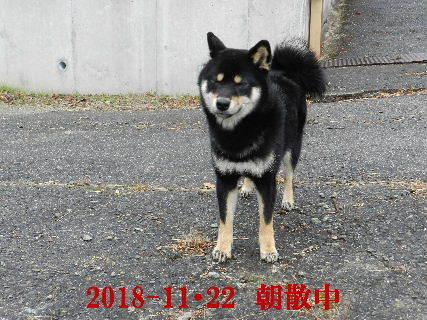 2018-11・22 今日の麻呂 (3).JPG