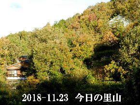 2018-11・23 今日の里山は・・・ (4).JPG