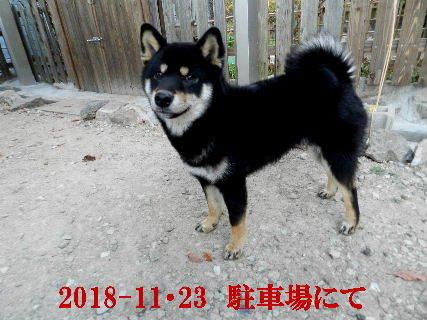 2018-11・23 今日の麻呂 (3).JPG