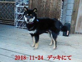 2018-11・24 きょうのまろ (2).JPG