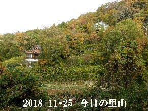 2018-11・25 今日の里山は・・・ (4).JPG