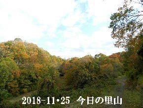 2018-11・25 今日の里山は・・・ (5).JPG