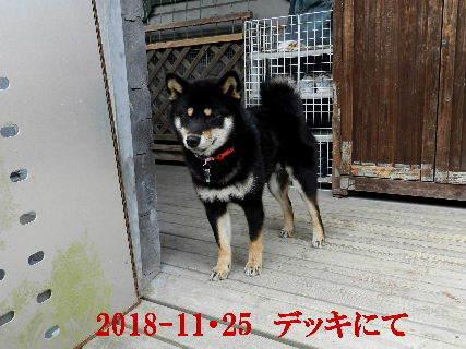 2018-11・25 今日の麻呂 (4).JPG