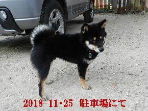 2018-11・25 今日の麻呂 (8).JPG