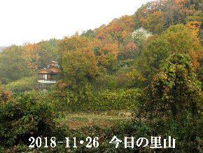 2018-11・26 今日の里山は・・・ (4).JPG