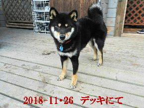 2018-11・26 今日の麻呂 (2).JPG