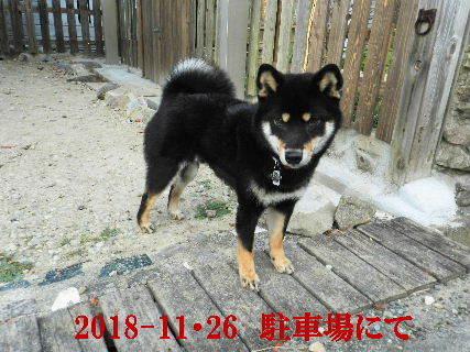 2018-11・26 今日の麻呂 (5).JPG